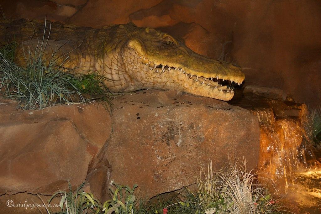 Орландо. Крокодил-раз