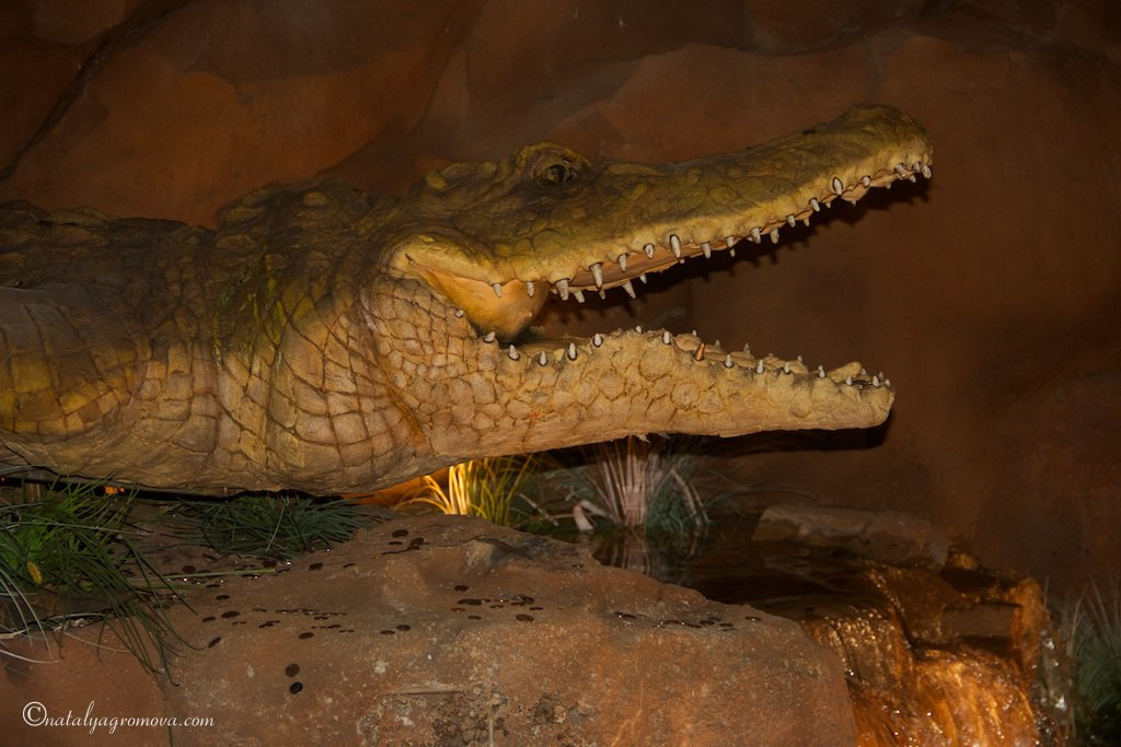 Орландо. Крокодил-два